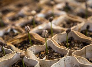 Co warto wiedzieć przed zakupem nasion