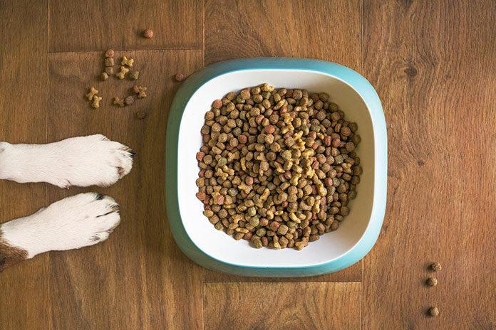 Bezzbożowa karma dla psa