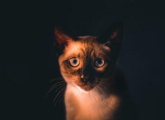 Czy warto kupować suche karmy dla kota
